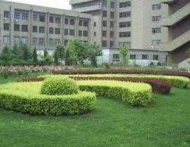 上海廠區綠化與養護
