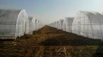 衡水温室大棚建设