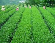 蔬菜、水果、烟草等农作物杀菌