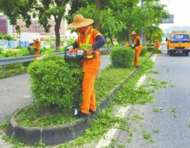 道路綠化養護工程