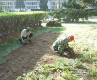 草坪种植方法