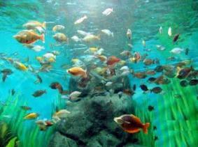 东戴河山海关海洋水族馆