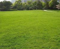 草坪种植养护技术